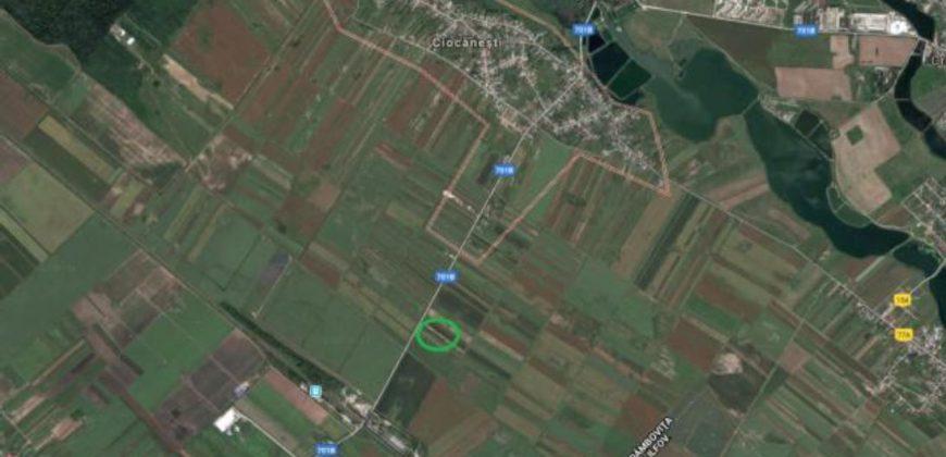 Teren extravilan in Ciocanesti
